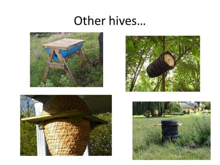 Other hives…. The 'lang' The 'Lang' Like a filing folder Wax foundation Supers.