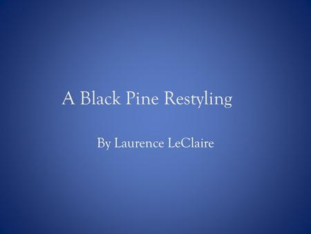 A Black Pine Restyling By Laurence LeClaire. Introduction In June 2007, I purchased a Japanese Black Pine from Ruben Guzman's garden (a longtime Danville,