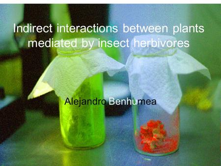 Indirect interactions between plants mediated by insect herbivores Alejandro Benhumea.