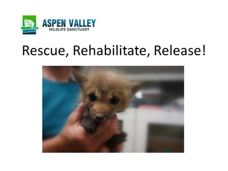 Rescue, Rehabilitate, Release!. Wildlife Rehabilitation Centres Rescue baby wild animals that have become separated from their mothers injured wild animals.