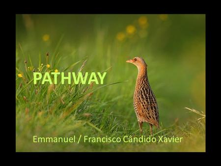 PATHWAY Emmanuel / Francisco Cândido Xavier The human body represents on earth the most sublime sanctuary and one of the wonders of the divine work.