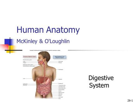 Human Anatomy McKinley & O'Loughlin