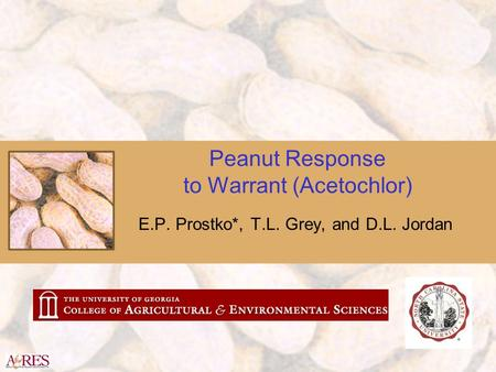 Peanut Response to Warrant (Acetochlor) E.P. Prostko*, T.L. Grey, and D.L. Jordan.
