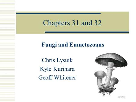 Chapters 31 and 32 Fungi and Eumetozoans Chris Lysuik Kyle Kurihara Geoff Whitener etc.usf.edu.