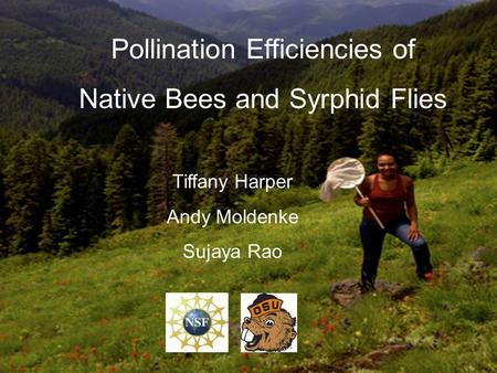Pollination Efficiencies of Native Bees and Syrphid Flies Tiffany Harper Andy Moldenke Sujaya Rao.