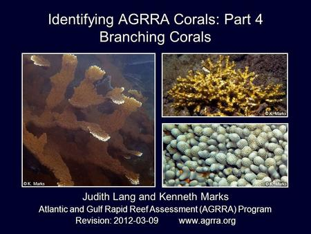Identifying AGRRA Corals: Part 4 Branching Corals Judith Lang and Kenneth Marks Atlantic and Gulf Rapid Reef Assessment (AGRRA) Program Revision: 2012-03-09.