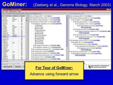 GoMiner: (Zeeberg et al., Genome Biology, March 2003) For Tour of GoMiner: Advance using forward arrow.