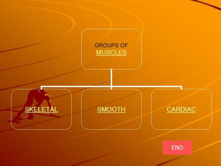 GROUPS OF MUSCLES MUSCLES SKELETALSMOOTHCARDIAC END.