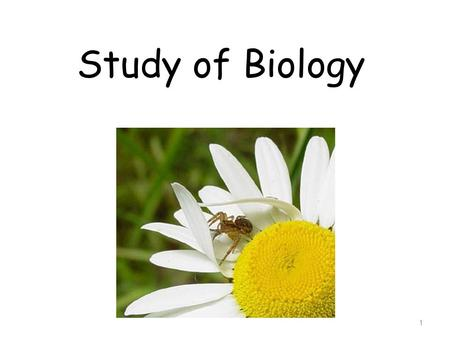 Study of Biology 1. What is Biology? Biology is the study of all living things Living things are called organisms Organisms include bacteria, protists,