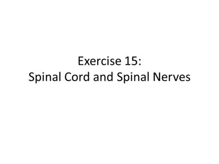 Exercise 15: Spinal Cord and Spinal Nerves. 1. Spinal Cord Extends from the foramen magnum of the skull to the first or second lumbar vertebra (L 1 &