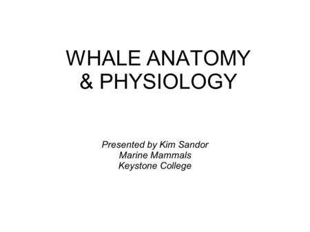 WHALE ANATOMY & PHYSIOLOGY Presented by Kim Sandor Marine Mammals Keystone College.