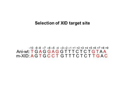 Selection of XID target site Ani-wt: T G A G G A G G T T T C T C T G T A A m-XID: A G T G C C T G T T T C T C T T G A C -10 -9 -8 –7 –6 –5 -4 –3 –2 –1.