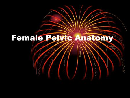Female Pelvic Anatomy.