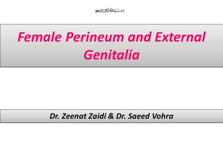Female Perineum and External Genitalia Dr. Zeenat Zaidi & Dr. Saeed Vohra.
