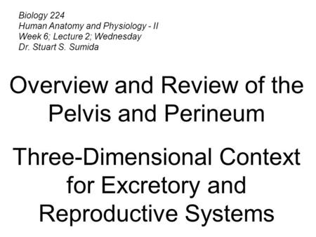 Biology 224 Human Anatomy and Physiology - II Week 6; Lecture 2; Wednesday Dr. Stuart S. Sumida Overview and Review of the Pelvis and Perineum Three-Dimensional.