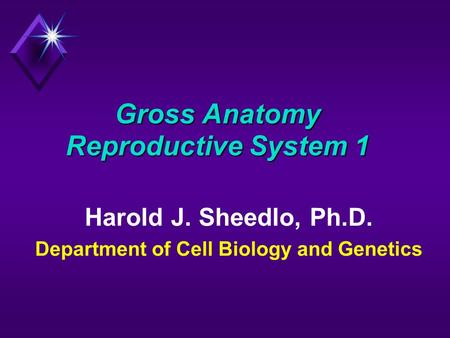Gross Anatomy Reproductive System 1 Harold J. Sheedlo, Ph.D. Department of Cell Biology and Genetics.