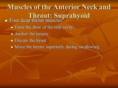 Muscles of the Anterior Neck and Throat: Suprahyoid Four deep throat muscles Four deep throat muscles Form the floor of the oral cavity Form the floor.