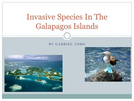BY GABRIEL COBO Invasive Species In The Galapagos Islands.
