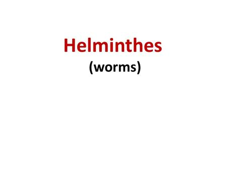 Helminthes (worms).