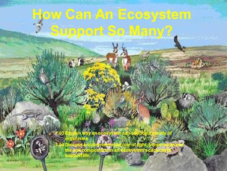 How Can An Ecosystem Support So Many? 1.03 Explain why an ecosystem can support a variety of organisms. 1.04 Discuss and determine the role of light, temperature.