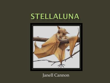 Janell Cannon. Stellaluna's mother and Stellaluna were chased by 2 wild owls. Stellaluna's mother accidently dropped her in the air.