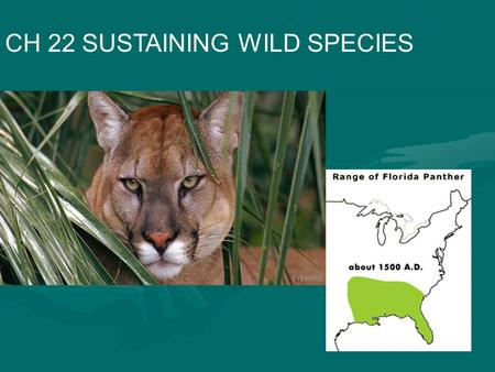 CH 22 SUSTAINING WILD SPECIES. IV. Extinction Threats from Habitat Loss A. Greatest threat is habitat loss, degradation and fragmentation Highest species.
