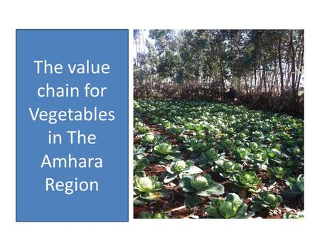 The value chain for Vegetables in The Amhara Region.