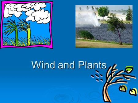 Wind and Plants. WIND   Wind has a major effect on agricultural and horticultural production in NZ.   The prevailing winds are the most common winds.