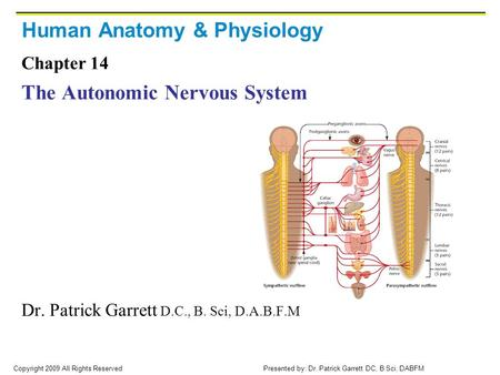 Copyright 2009 All Rights Reserved Presented by: Dr. Patrick Garrett DC, B Sci, DABFM Human Anatomy & Physiology Chapter 14 The Autonomic Nervous System.