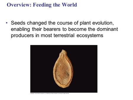 Overview: Feeding the World Seeds changed the course of plant evolution, enabling their bearers to become the dominant producers in most terrestrial ecosystems.