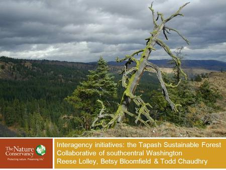 Interagency initiatives: the Tapash Sustainable Forest Collaborative of southcentral Washington Reese Lolley, Betsy Bloomfield & Todd Chaudhry Insert Your.