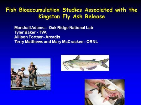 Fish Bioaccumulation Studies Associated with the Kingston Fly Ash Release Marshall Adams - Oak Ridge National Lab Tyler Baker - TVA Allison Fortner - Arcadis.