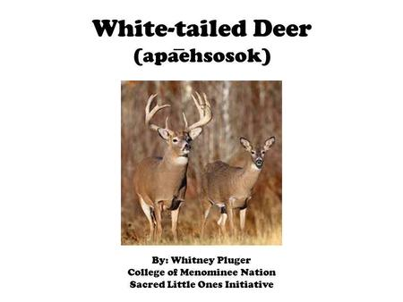 White-tailed Deer (apaehsosok) By: Whitney Pluger College of Menominee Nation Sacred Little Ones Initiative.
