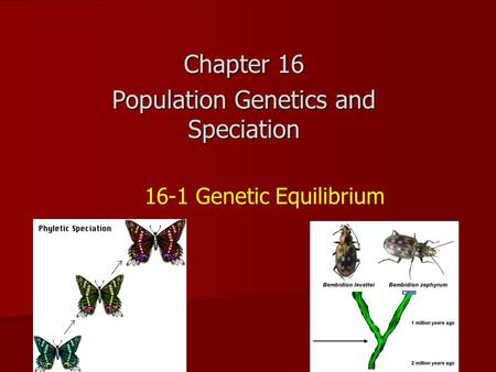16-1 Genetic Equilibrium Chapter 16 Population Genetics and Speciation.