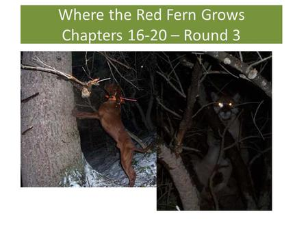 Where the Red Fern Grows Chapters – Round 3