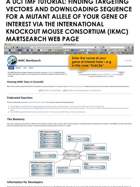 A UCI TMF TUTORIAL: FINDING TARGETING VECTORS AND DOWNLOADING SEQUENCE FOR A MUTANT ALLELE OF YOUR GENE OF INTEREST VIA THE INTERNATIONAL KNOCKOUT MOUSE.