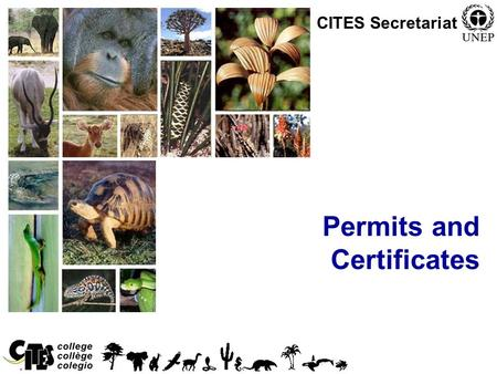 1 Permits and Certificates CITES Secretariat. 2 Overview Permits and certificates Normal procedures.