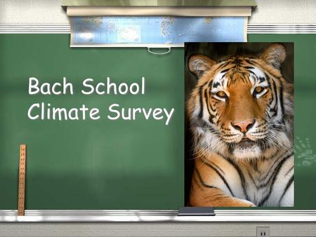 Bach School Climate Survey. Bach School Respectful, Responsible and Safe / 331 students enrolled / 130 surveys returned / 169 students represented in.