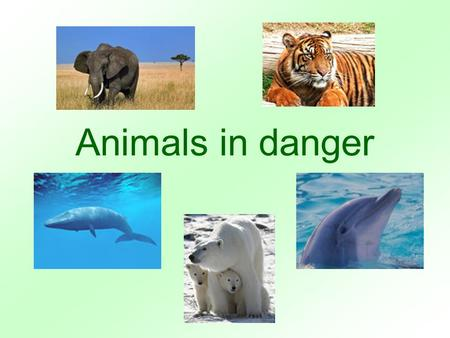 Animals in danger. different continent depend to depend on … the Earth among danger to be in danger dangerous domestic afraid price nowadays disappear.