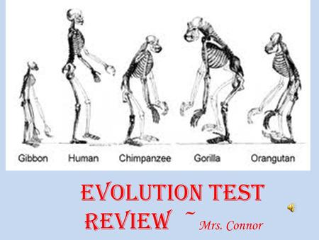 Evolution Test Review ~ Mrs. Connor Fossil the solidified remains or imprint of a previously existing organism.