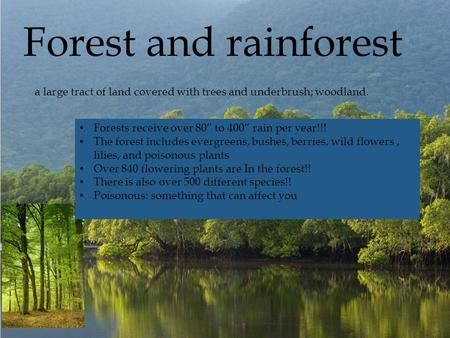 " Forests receive over 80"" to 400"" rain per year!!! The forest includes evergreens, bushes, berries, wild flowers, lilies, and poisonous plants Over 840."