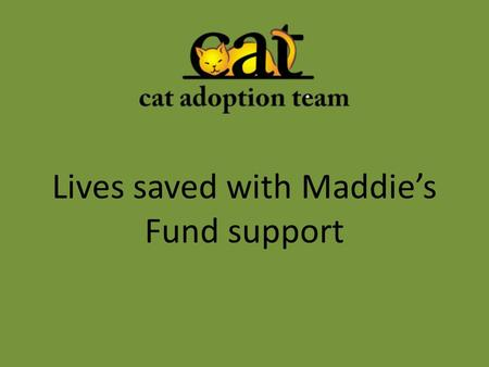 Lives saved with Maddie's Fund support. The Award In May 2013, CAT was awarded a $165,000 grant as part of a Maddie's Fund Lifesaving Award to the Animal.