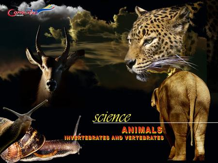 Animals There are 2 groups: