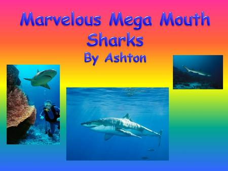 Marvelous Mega Mouth Sharks