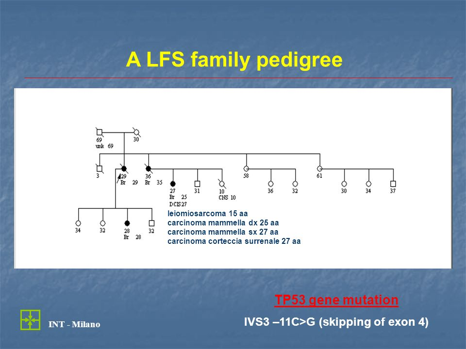 Genotype-phenotype correlations in LFS TP53 mutations are detectable in 50-70% of LFS families, but only in 20% of LFL families (Varley et al., Br J Cancer 1997) TP53 mutations are detectable in 50-70% of LFS families, but only in 20% of LFL families (Varley et al., Br J Cancer 1997) MutationsTumours Missense mutatios in the DNA binding domains Brain tumours Missense mutations outside DNA binding domains Adrenal tumours Null mutations Brain tumours (early onset) (Olivier et al., Cancer Res 2003)