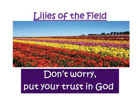 Lilies of the Field Don't worry, put your trust in God.