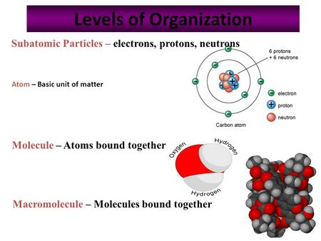1 Levels of Organization Subatomic Particles – electrons, protons, neutrons Molecule – Atoms bound together Macromolecule – Molecules bound together Atom.