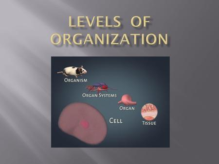 The basic unit of life. Examples:  Blood cell  Nerve cell  Muscle cell.