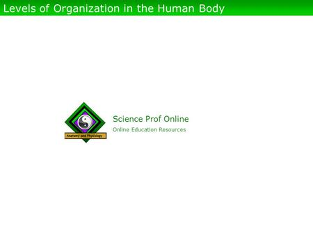 Science Prof Online Online Education Resources Levels of Organization in the Human Body.