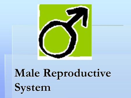Male Reproductive System. What the Male Reproductive System Does  Main function is to produce sperm and deliver it to the female reproductive system.
